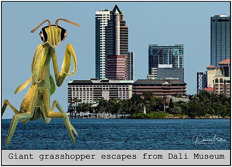 Dali Museum Grasshopper escapes