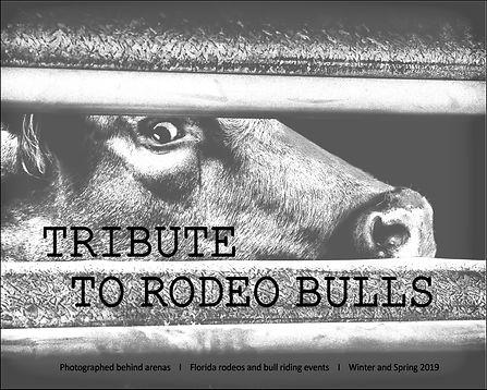 a Folio Bulls Title Page.jpg