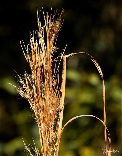 Weedon_Grass_108.jpg