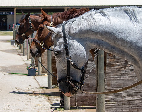 64_Horse show.jpg