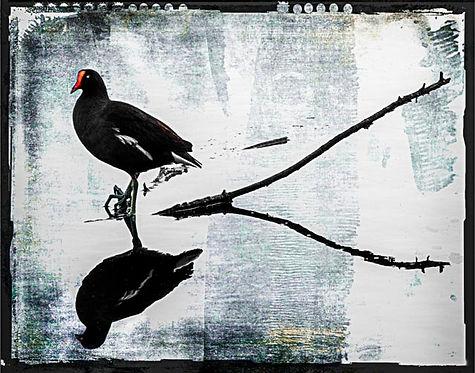 Circle B_070_Black bird on stick.jpg