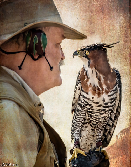 STEVE HODDY, Earthquest, brings his birds to Simmons Park. Ruskin, FL