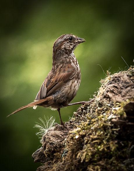 Song bird on The Long Climb