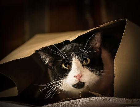 Faye, the wonder cat