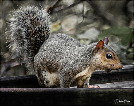 Lettuce Lake_Senior Squirrel 2-2.jpg
