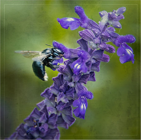 Purple flower bee searching for pollen