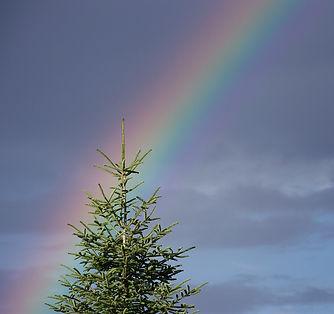 rainbow-1750531.jpg