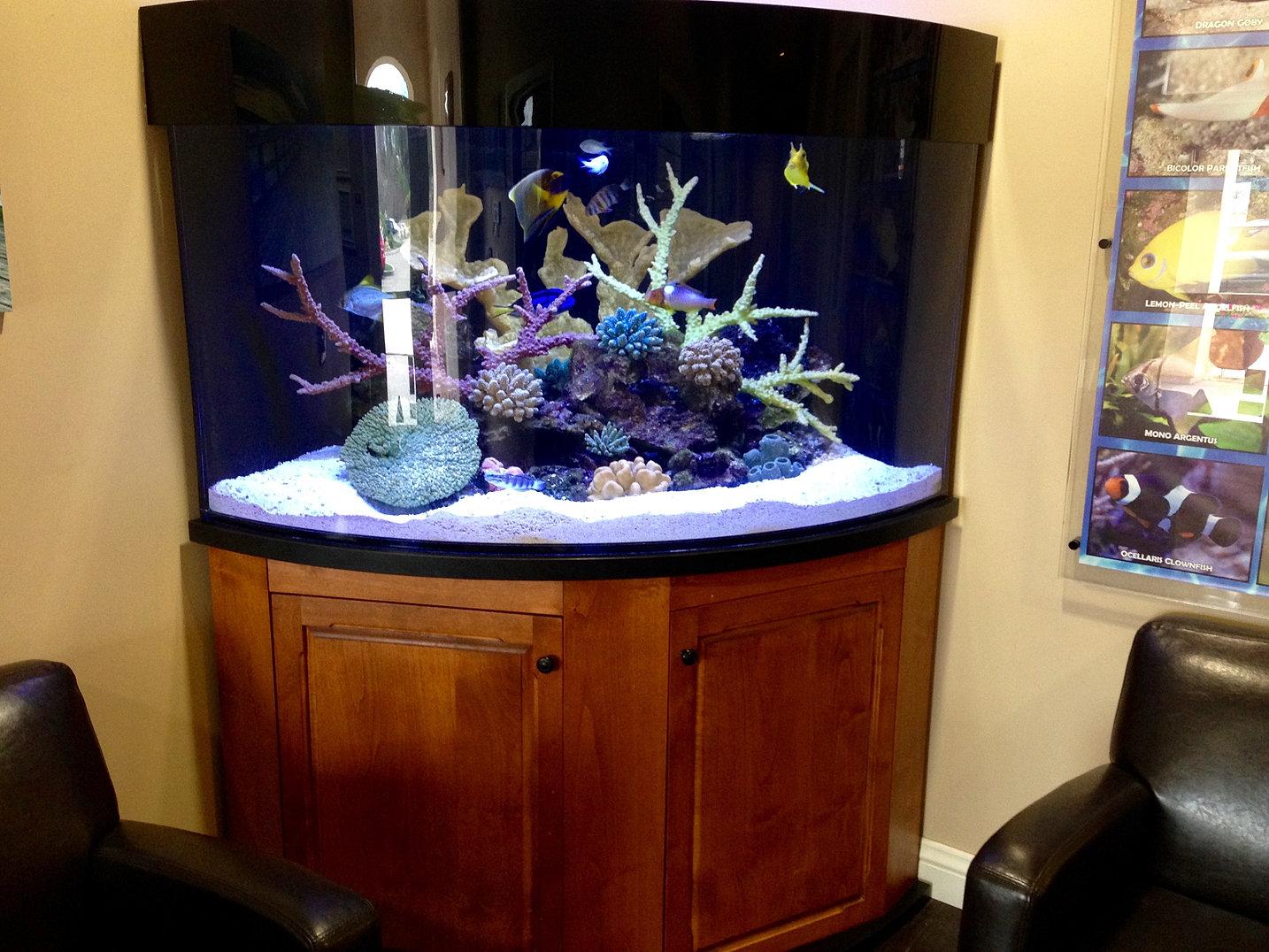 authentic aquariums fish only tanks