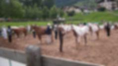 Travagliato Cavalli Paint horse club Italia