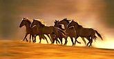 Trainer e Allevatori Paint Horse Club Italia