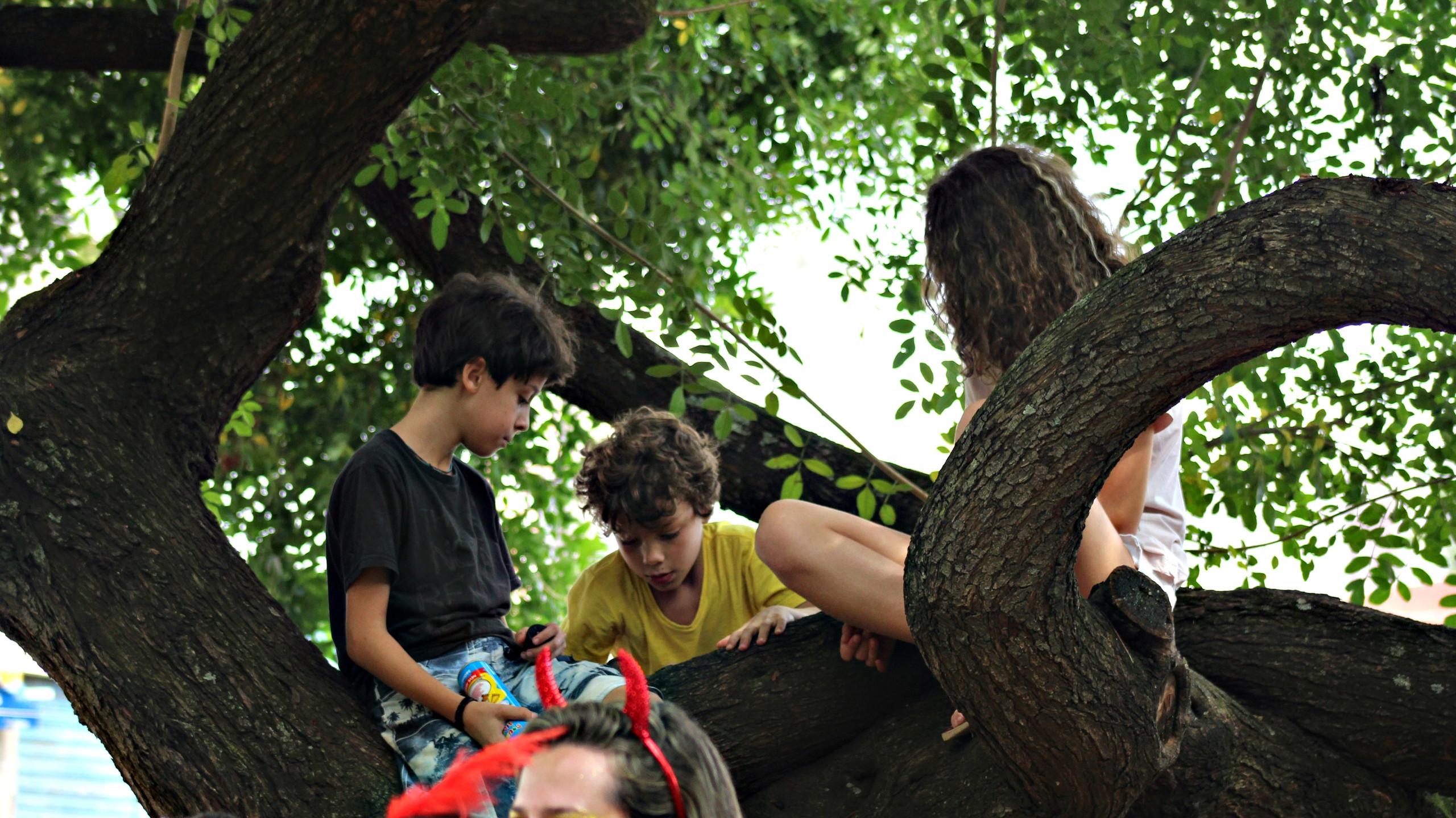 Árvore seletiva