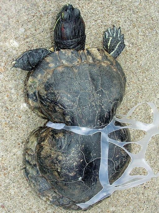 Turtle_edited.jpg