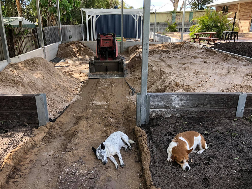 Two dogs resting during TG´s Child Care Urangan new centre´s refurbishment works
