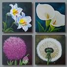"""Blütenportraits A""  40 x 40 cm"