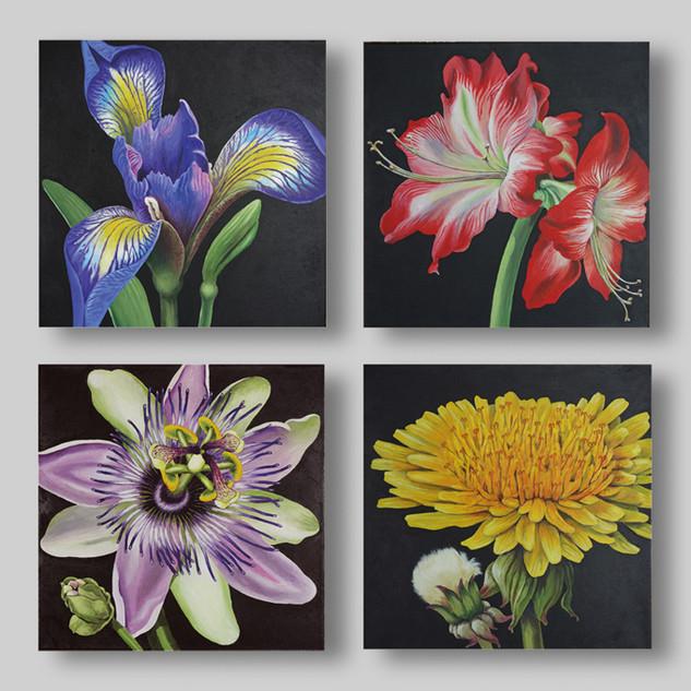 """Blütenportraits"" 40 x 40 cm"