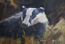 Badger on the hunt