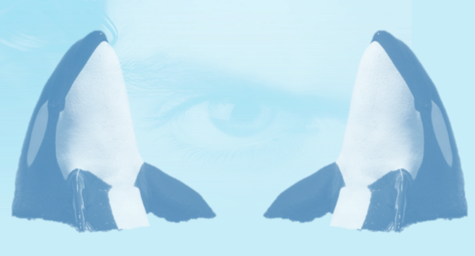 Banner%20OrcaSecure_edited.png