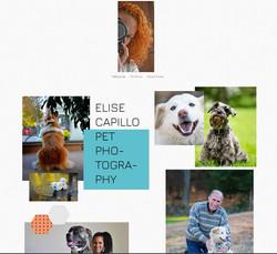 Elise Capillo Pet Photography