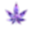 cannabis-4849442_1920_edited.png