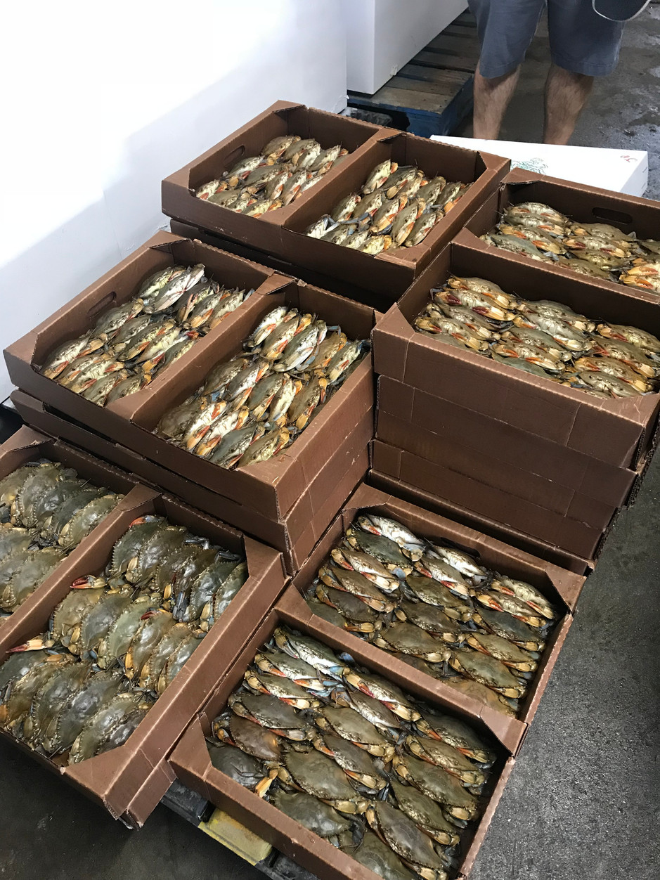Episode 98 - Fisherman's Plight, Soft-shell Crab Season in the OBX