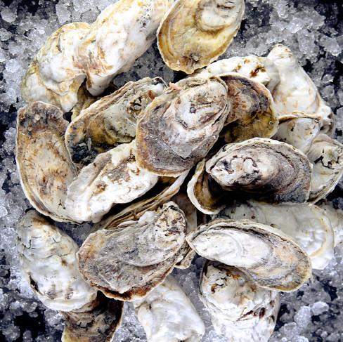 Seafood Distribution
