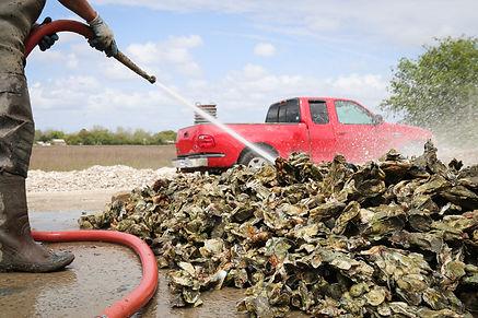 washing oysters.jpg