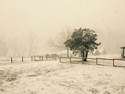 Snow at Coon Rock Farm