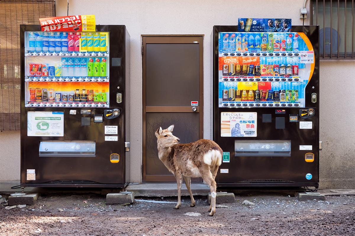 Japanese Vending Machines-5