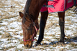 Caring For Senior Horses During Cold Weather