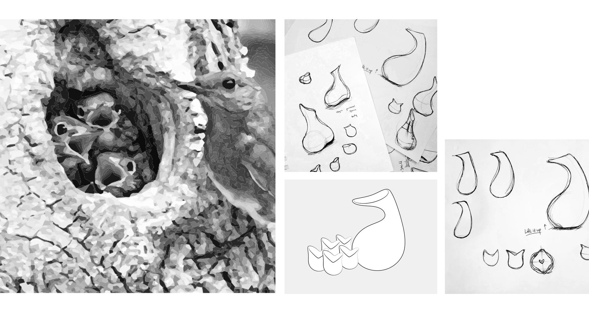 bird inspiration.png