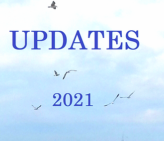 updatesציפורים.png