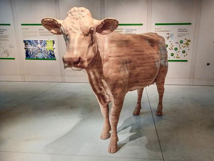 Vache Montbeliarde Maison du comté