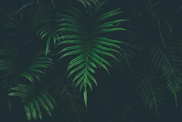 PlantChef Background.jpg