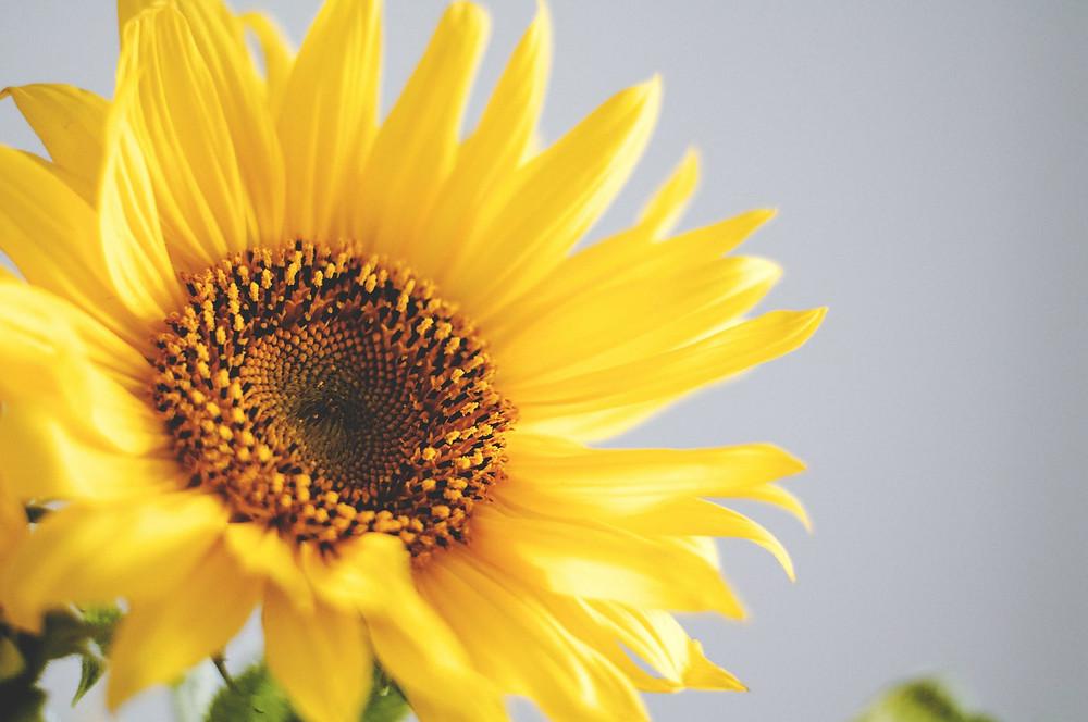 Sunflower image courtesy of PEXELS