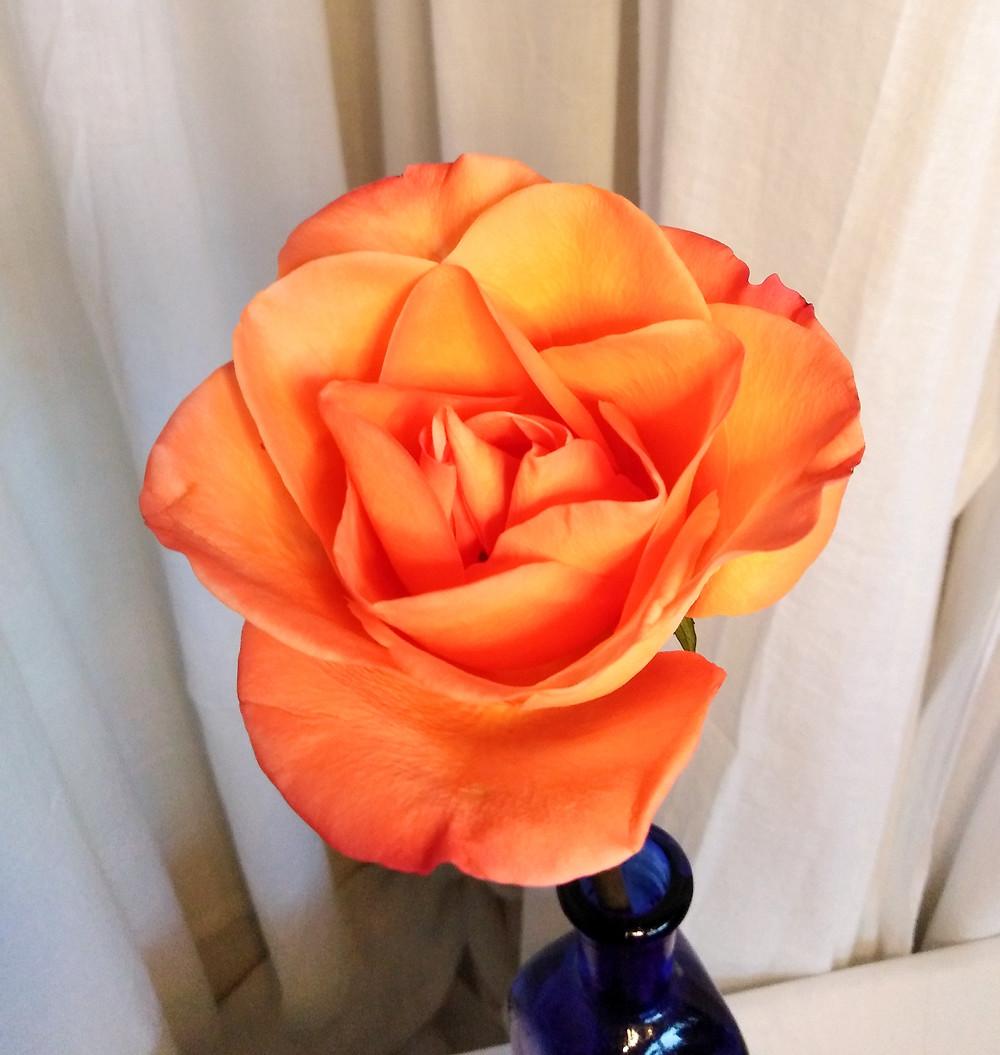 Orange Rose In Blue Vase