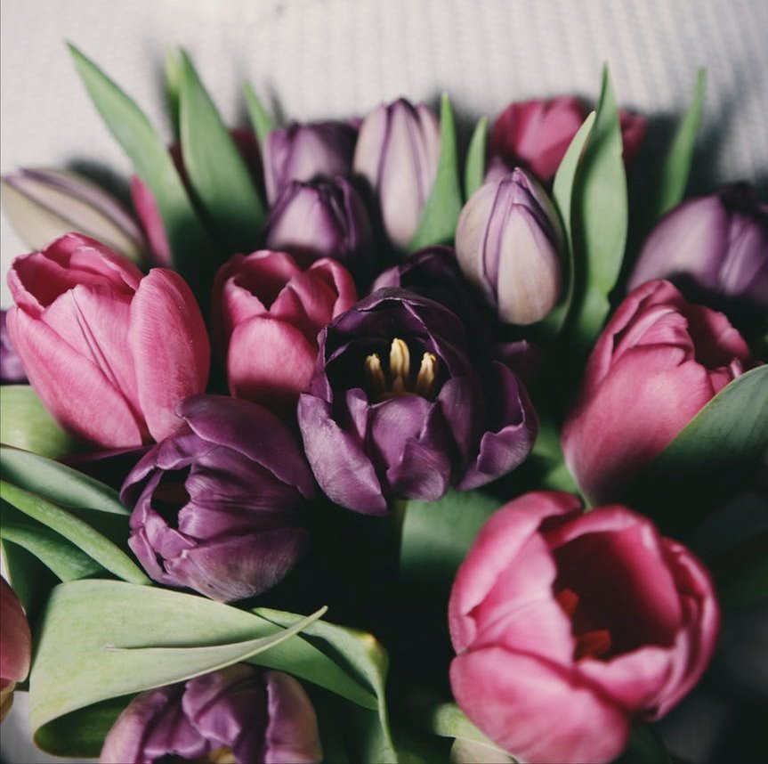 Purple Tulips Bouquet, image courtesy of freeimages