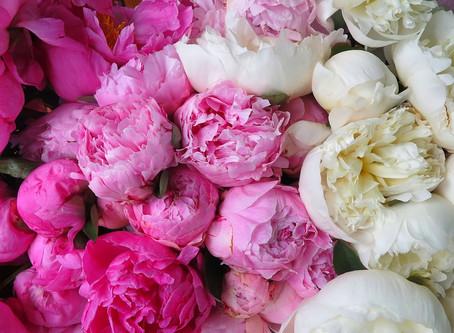 FRESH FLOWER TIPS - PEONY POWER