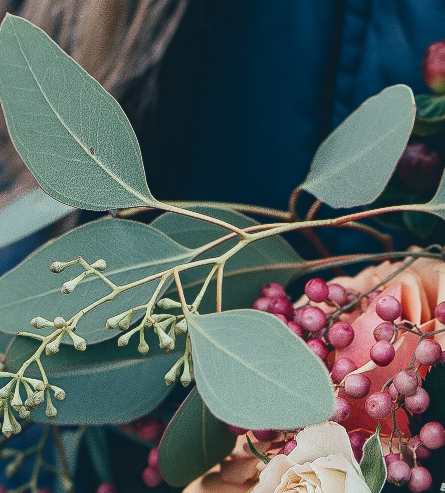 close-up of Eucalyptus and Berries