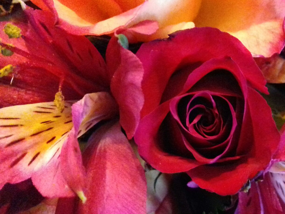 Rose and alstroemeria work well together