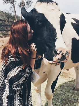 Jillian with her favorite Cow at the Acton Farm, Pinto.