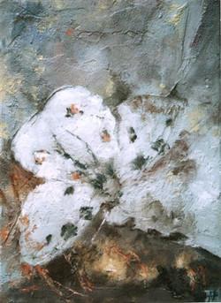 Papillon-fossile