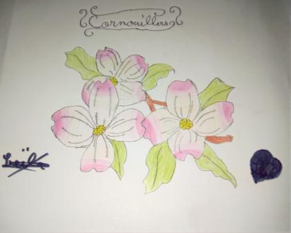 Fleurs de cornouiller de Leïla