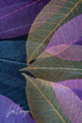 LAF_3101-Edit.jpg