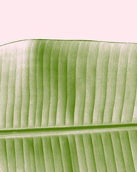 Leaf Beauty