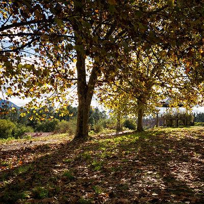 Alrededores de la Capilla de la Virgen de la Luz en la parroquia de Meder en Salvaterra de Miño (Pontevedra) Galicia. Photoperiplo estuvo fotografiando allí este otoño pasado coincidiendo con el magosto.