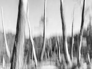 A veces un paisaje como este en la Fraga Vella en Mondoñedo (Lugo) Galicia invita a viajar para fotografiar también en blanco y negro