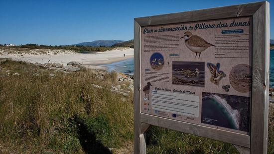 Indicaciones de la Lagoa, laguna, de Louro o de Xalfas en Muros (A Coruña) sobre la protección de la Píllara de las dunas en Galicia