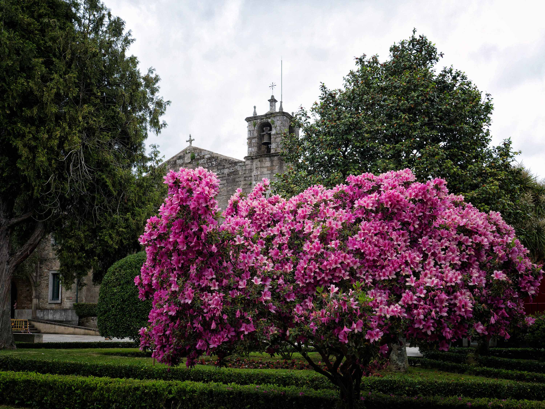 La primavera en La Alameda