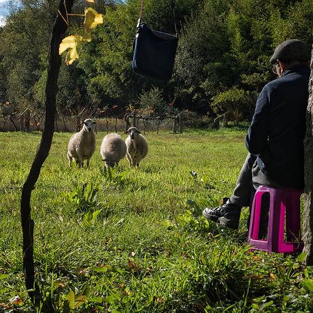Tranquilidad se respira por estos lugares de Salvaterra de Miño (Pontevedra) Galicia. Photoperiplo estuvo paseando por allí y fotografiando. Si te gusta viajar y fotografiar recuerda Photoperiplo.