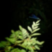 Libélulas, Caballitos del Diablo, efemeras, tricópteros, son abundantes en el río Uma a su paso por San Pedro de Angoares en Ponteareas. Buen sitio para viajar y fotografiar con Photoperiplo